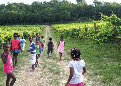 3 a passeggio tra le vigne